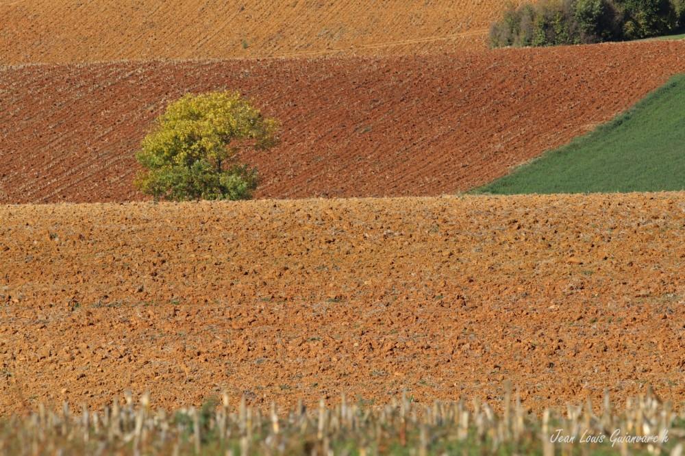 Terres d'automne.