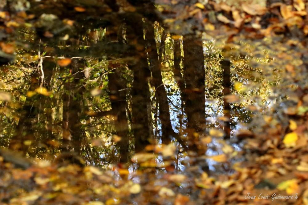 Réflexions d'automne.