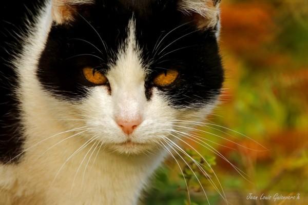 Des yeux couleur d'Automne.