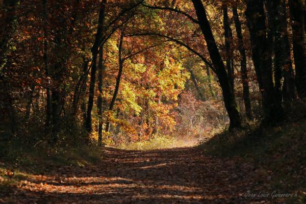 Chemin d'Automne.