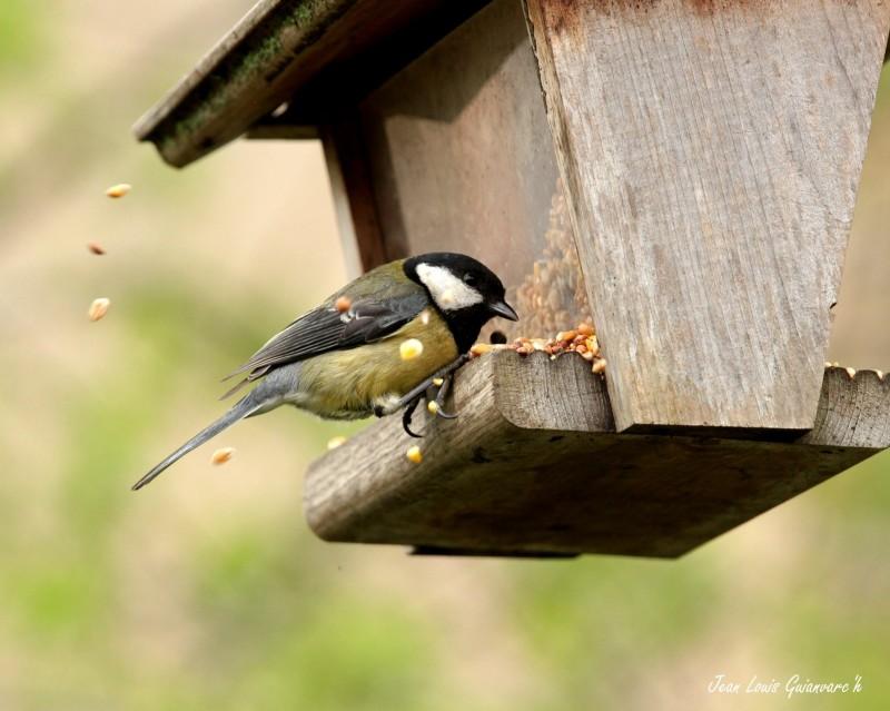 Quand nourrir les oiseaux ?