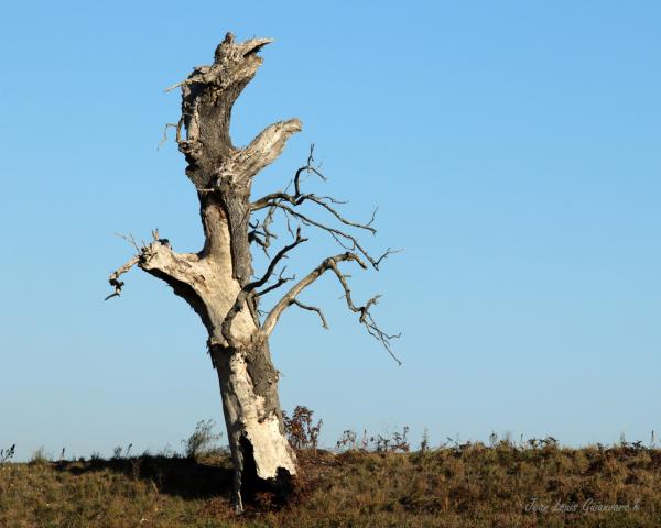 L'arbre mort est vivant!