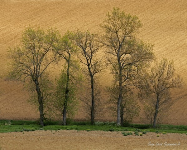 Prendre le temps de regarder les arbres.