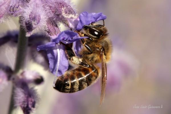 Il faut sauver les abeilles!