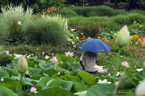 Le parapluie bleu.