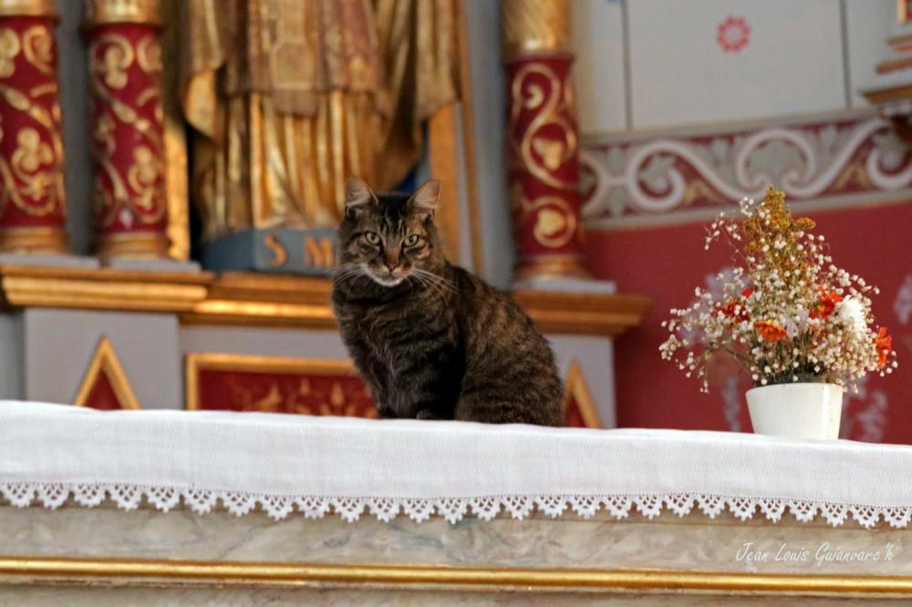 Le chat sur l'autel.