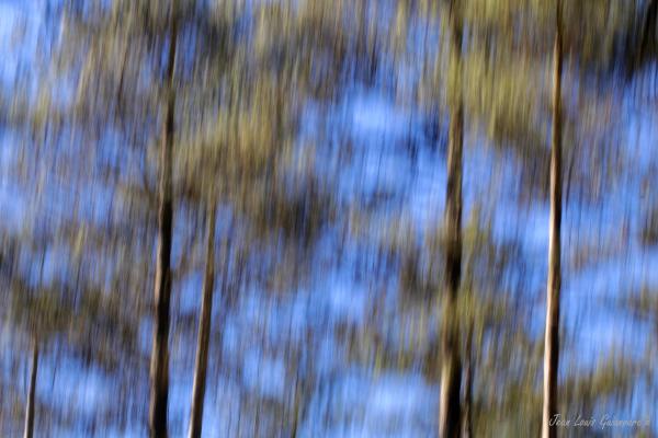 Couleurs forêt