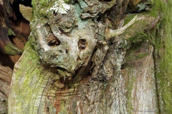 Un démon de la forêt