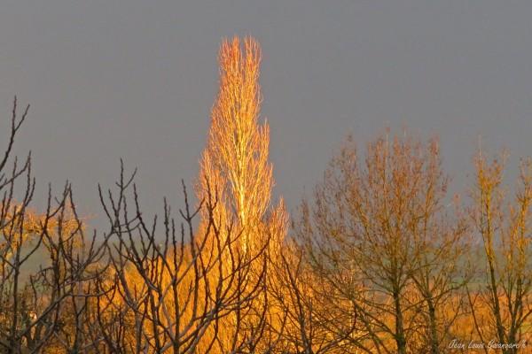 Un matin flamboyant