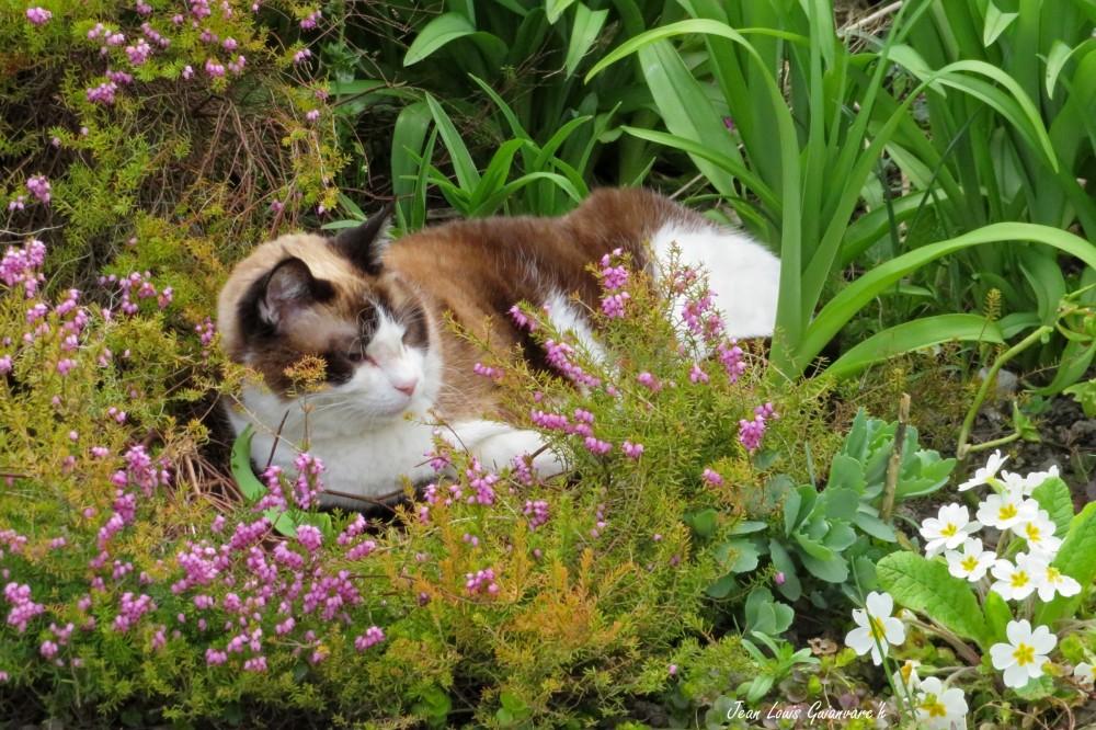 Rester dans son jardin