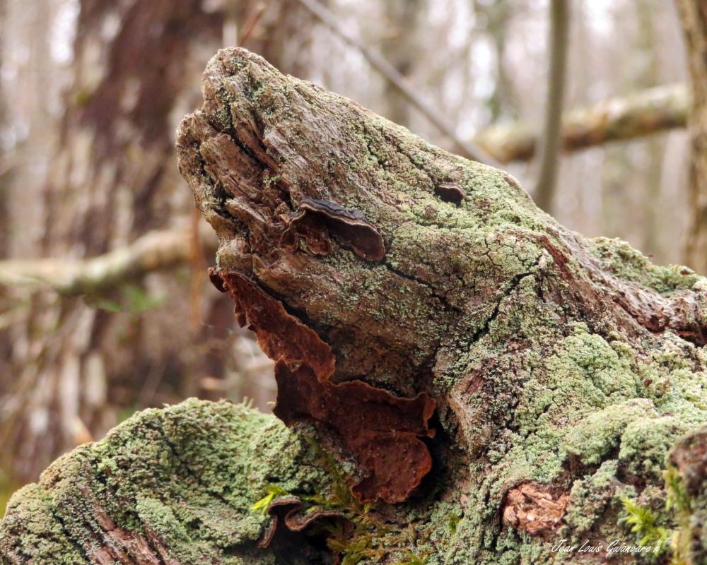 Créature de la forêt (1)