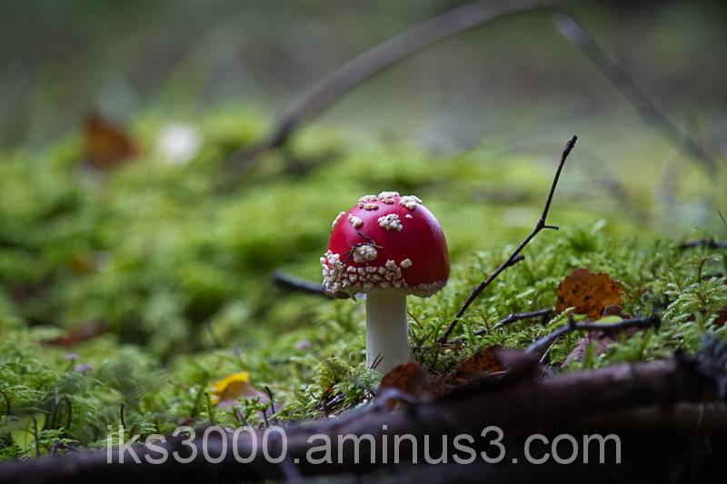 Smiling mushroom :)