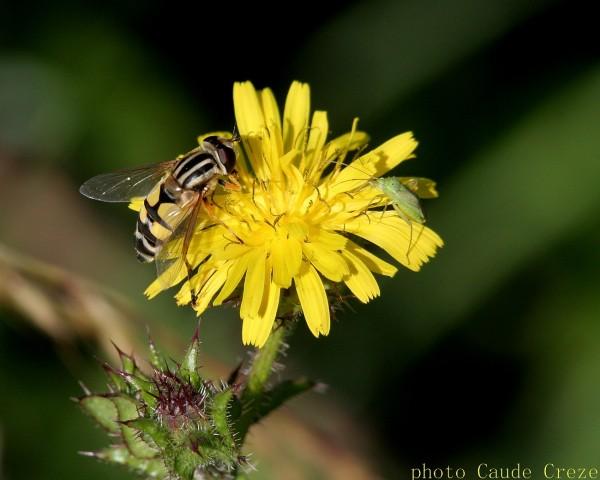 Insectes sur fleur