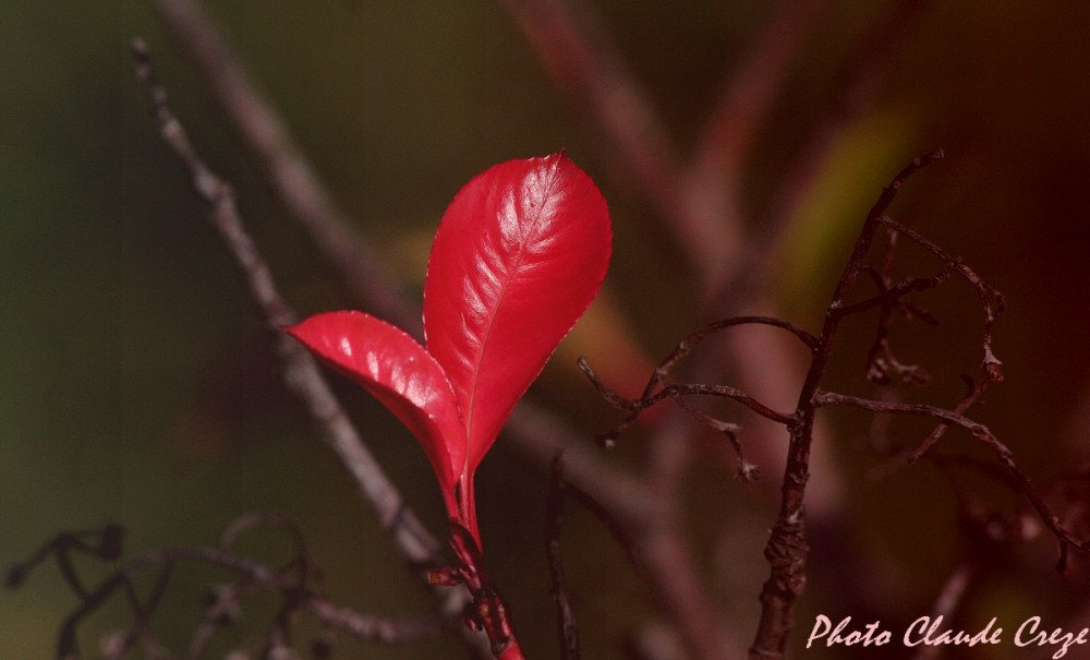 Chaudes couleurs de l'automne