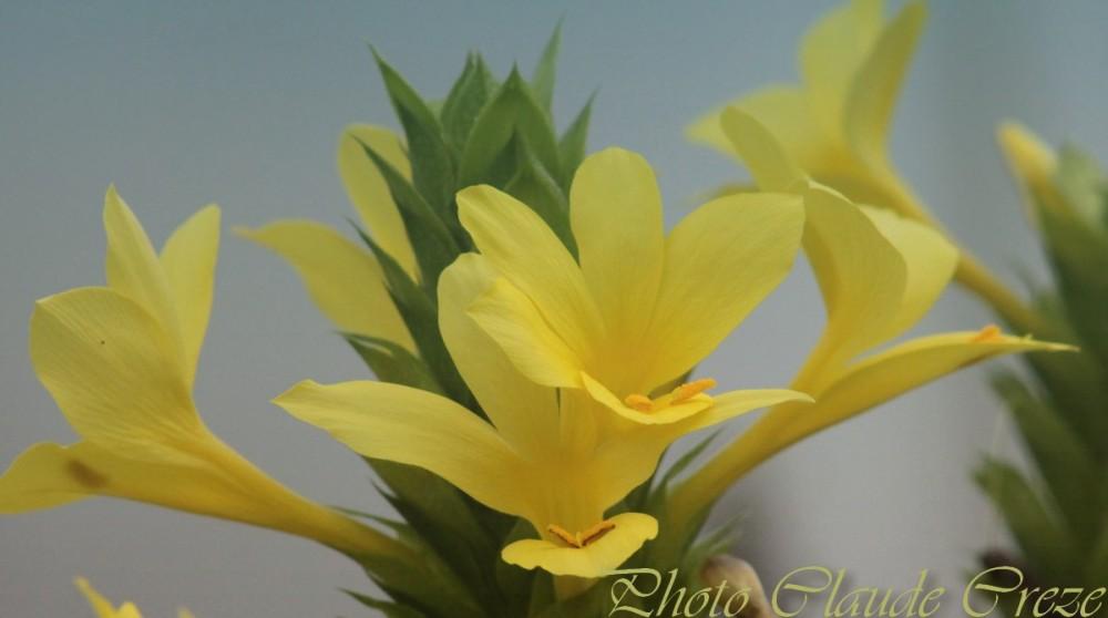 Des fleurs pour Cathy