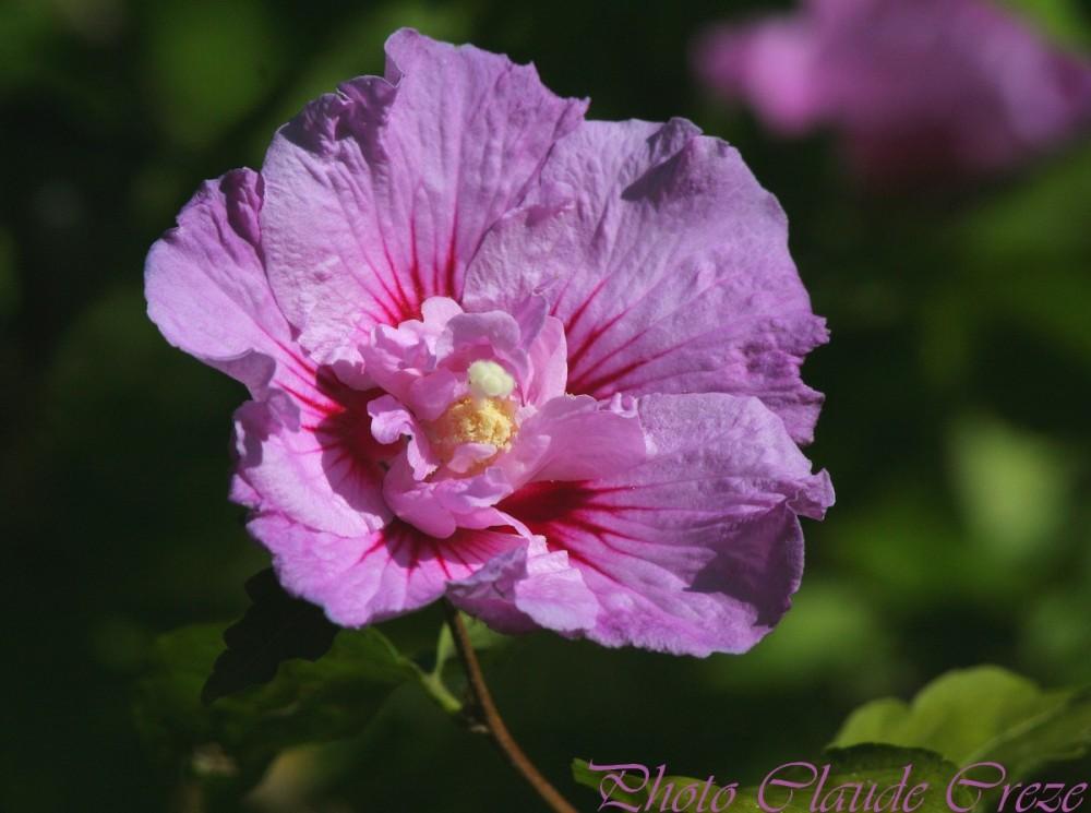 Au coeur de la fleur