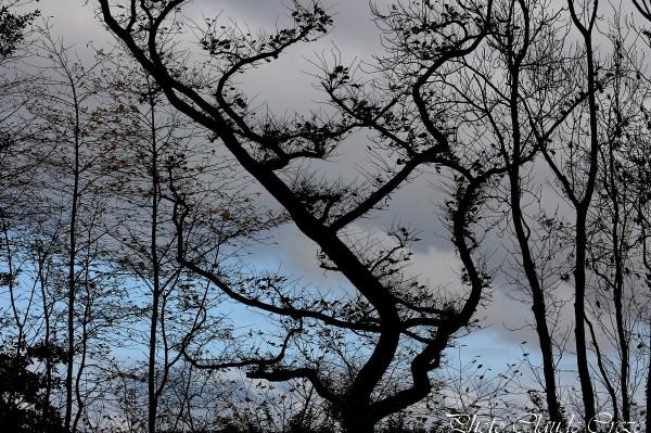 Ombres chinoises aux jardins suspendus