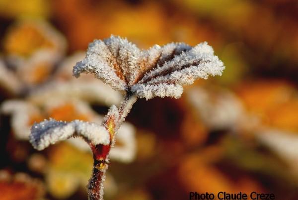 Les premières gelées de décembre