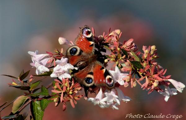 Papillon sur un coussin de fleurs