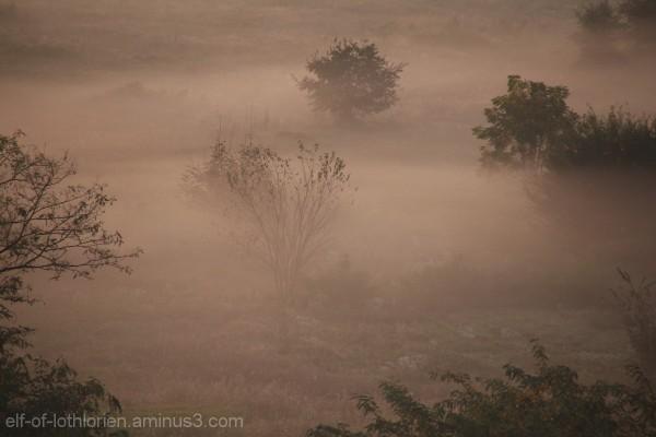 Morning fog in Turin II