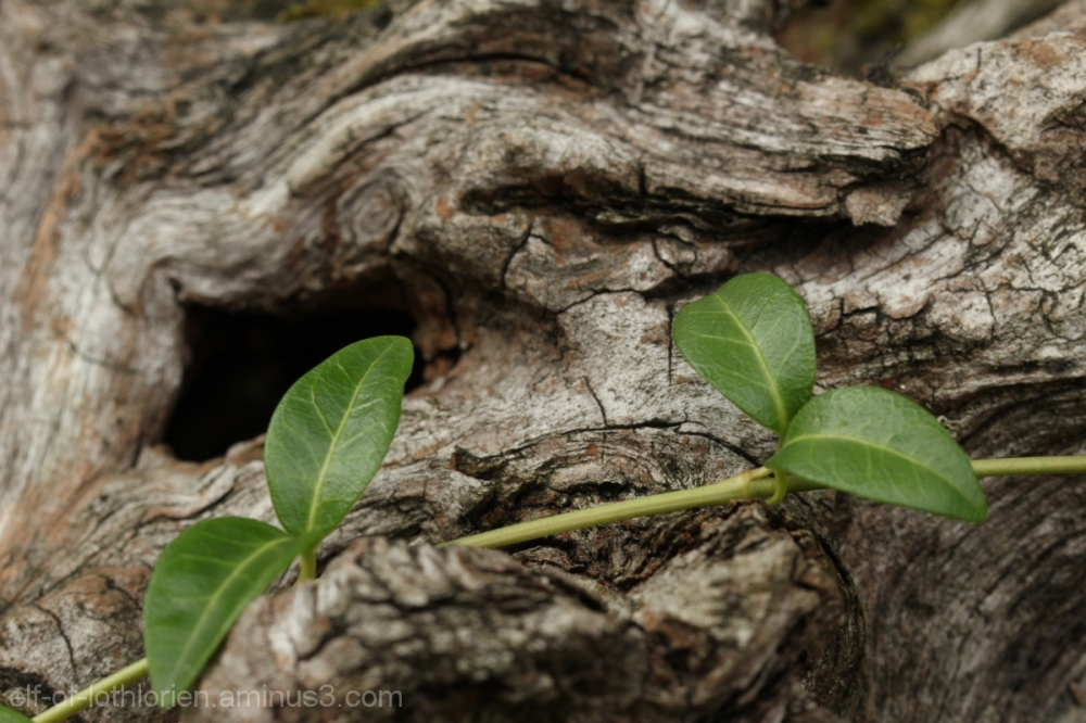 Wood and Plant