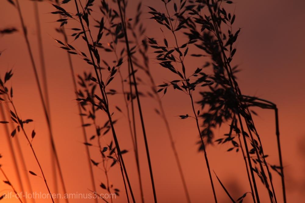 Grass (II)