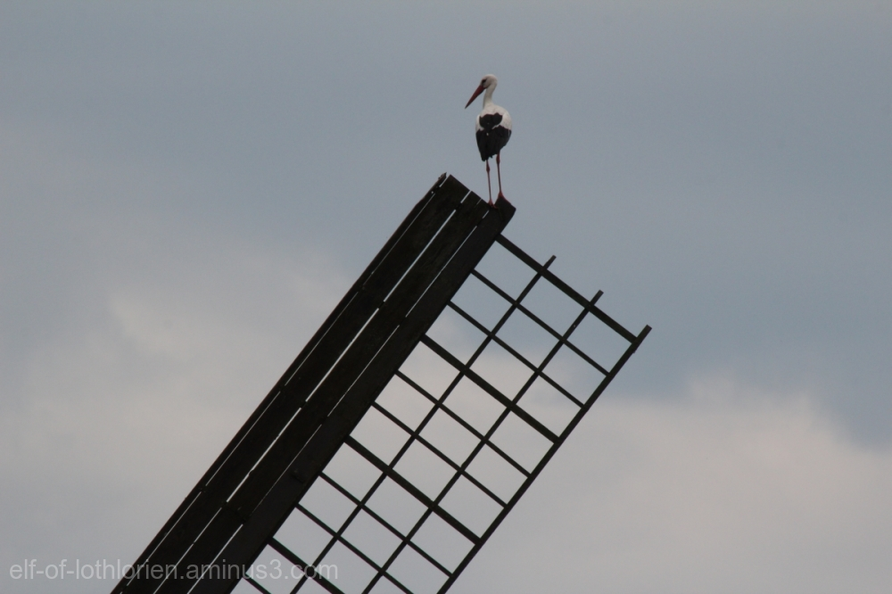 Sitting on the Windmill