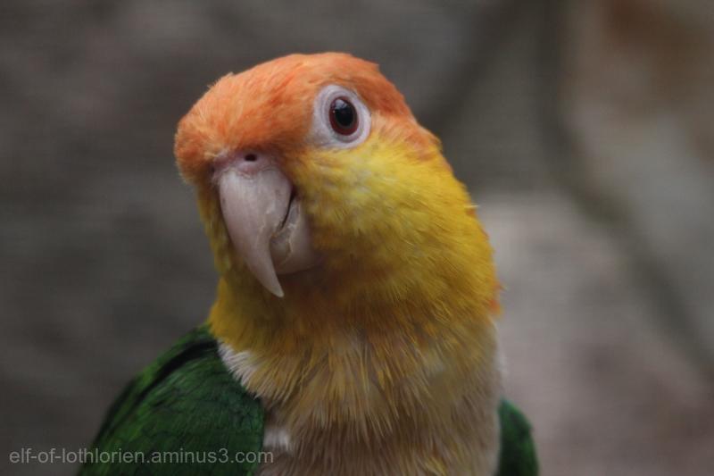 Bird Portrait III
