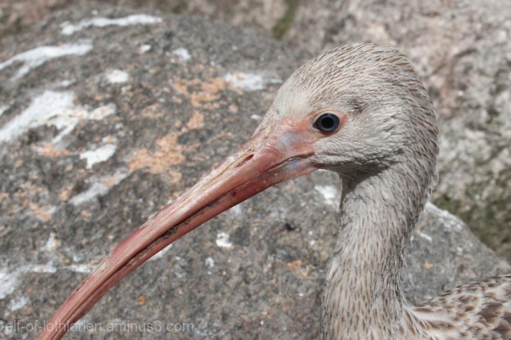 Bird Portrait V