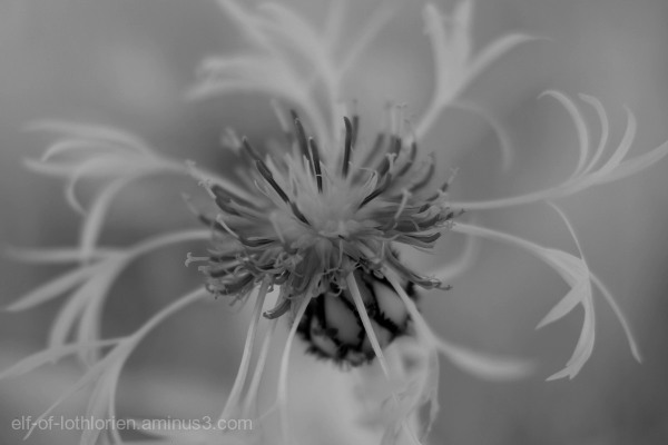 Flower in infrared