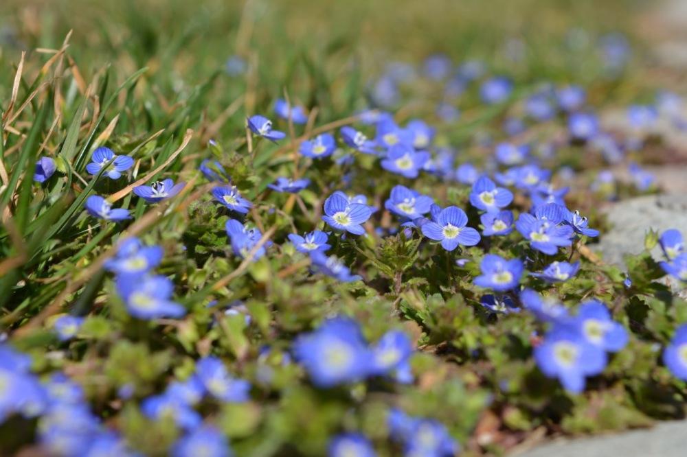 nice small flowers :)