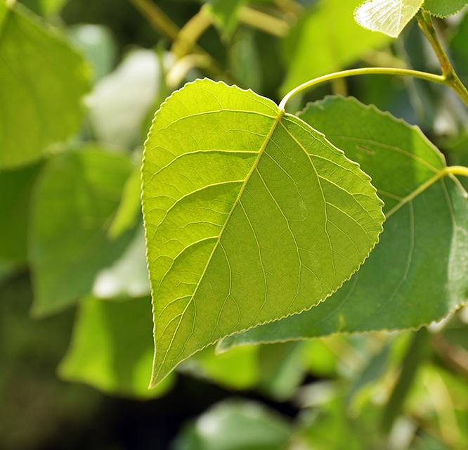 greeny life again ...
