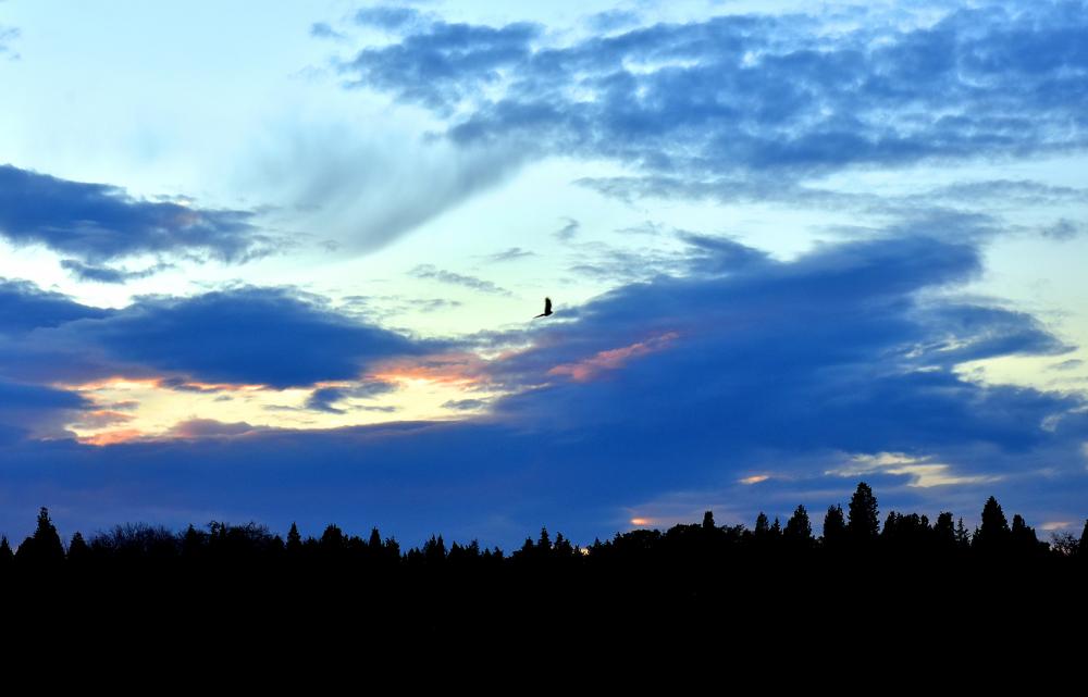 alone bird ...