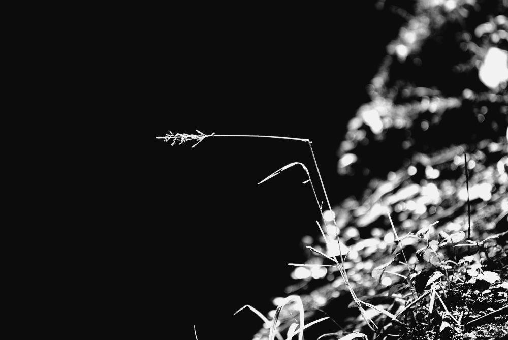 Tendència al negre