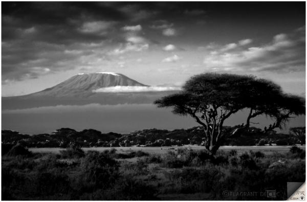 Vue sur le Kilimandjaro - View on Kilimanjaro
