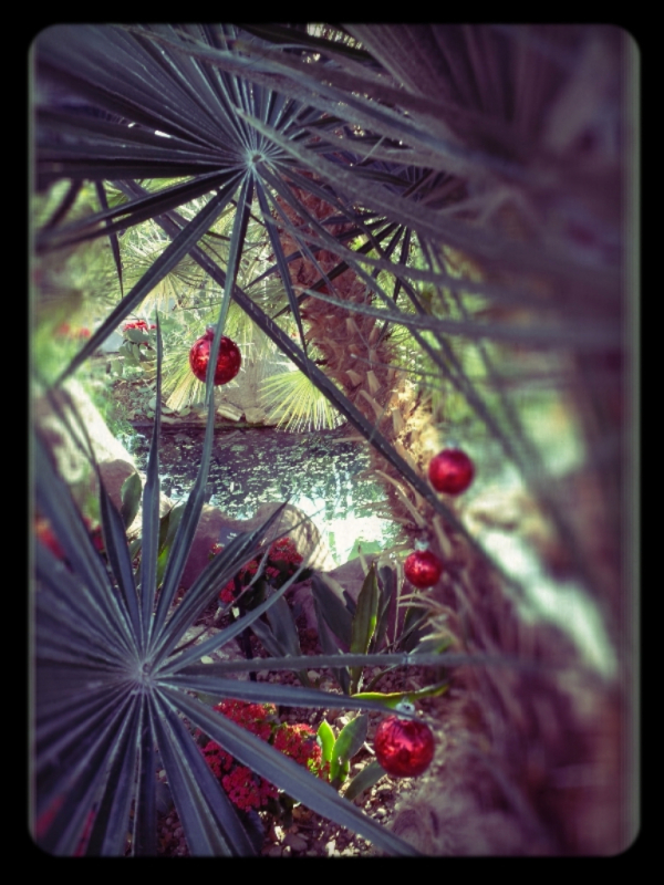 christmastime in the arid dome