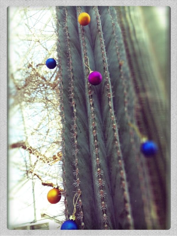 cactus xmas tree