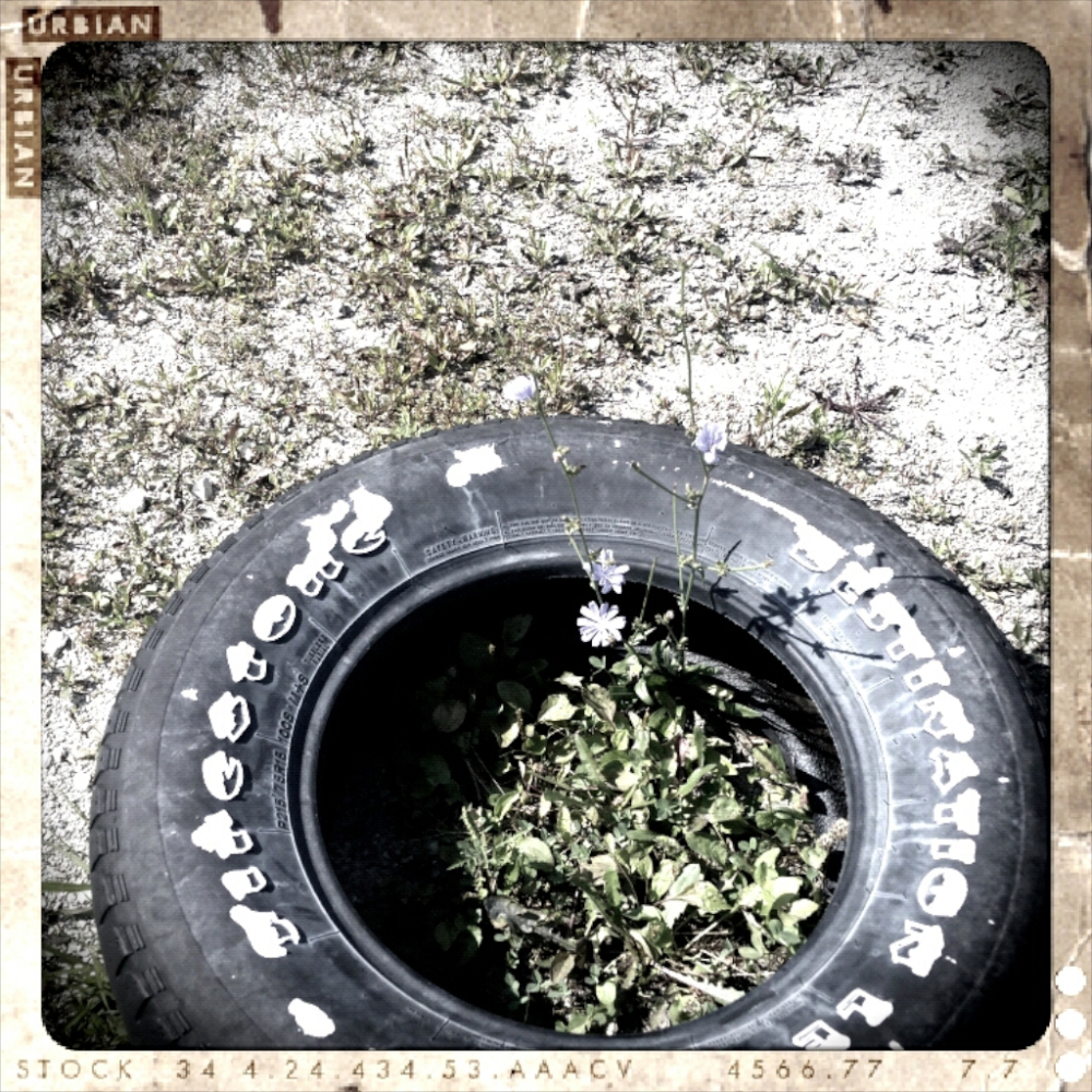 tire flower