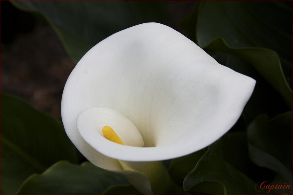 nature et fleurs