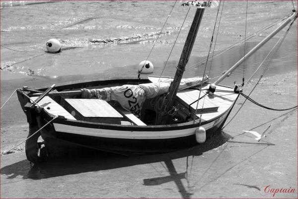 La mouette et le bateau