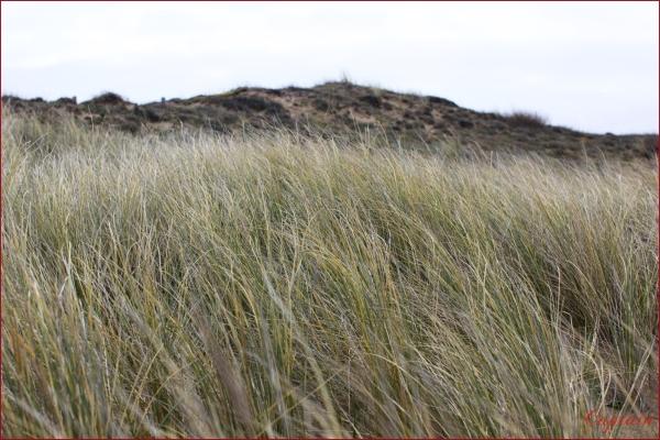Nature dunaire