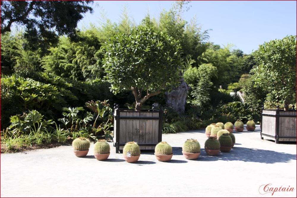 Terra botanica série