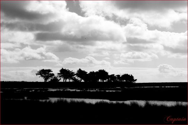 marais noirmoutier ile mer arbre nuages