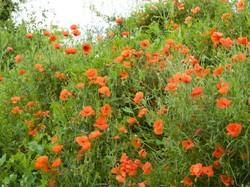 Talus fleuri