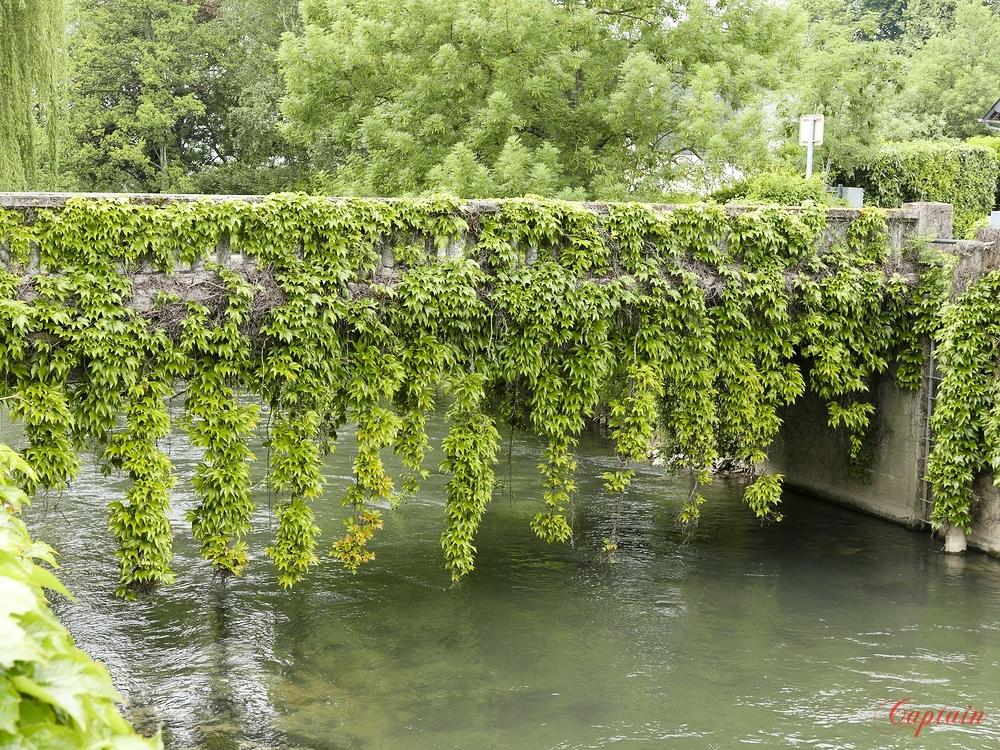 Le pont verdoyant