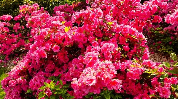 Floraison intense