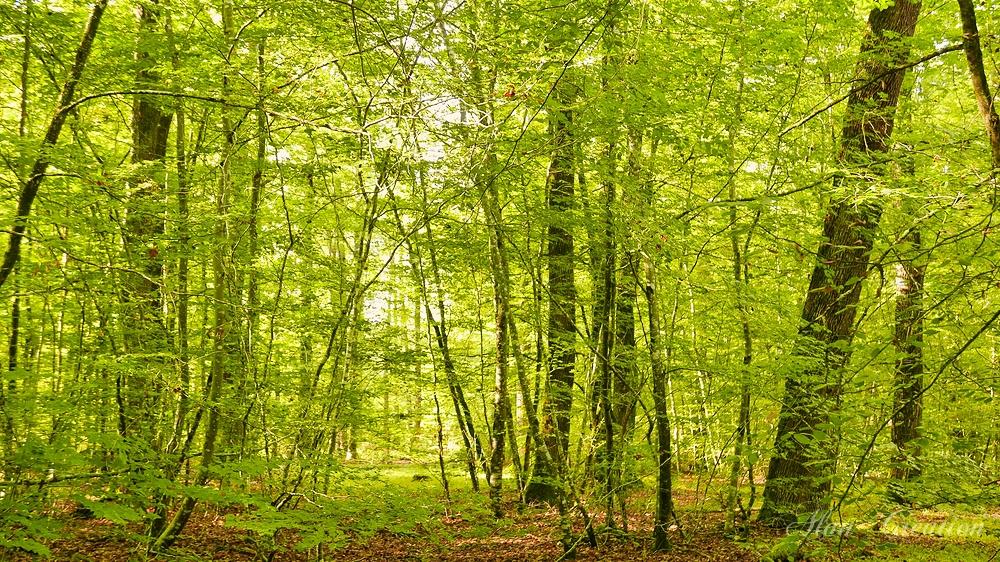 Lundi oxygénation et semaine nature