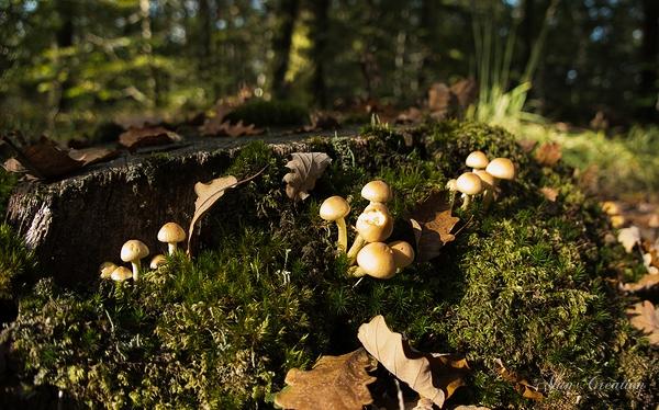 forêt champignons mousse lichen