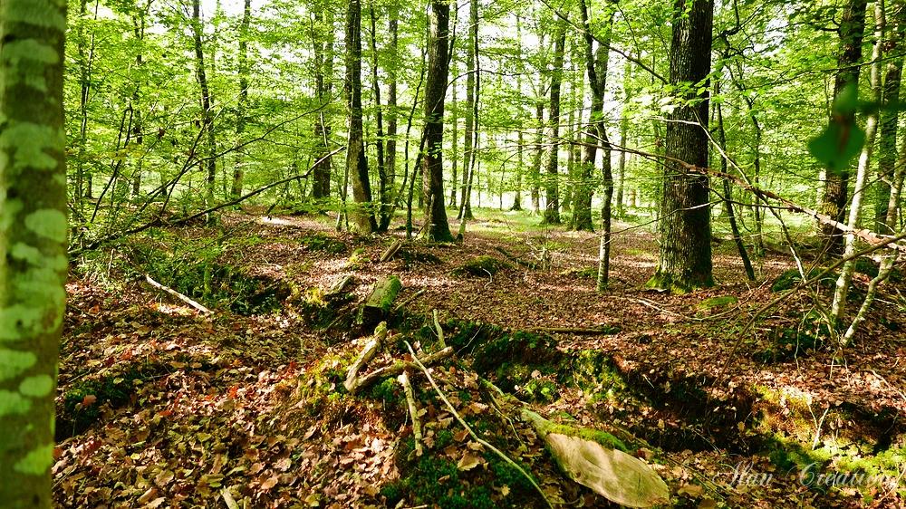 Forêt du Gâvre.