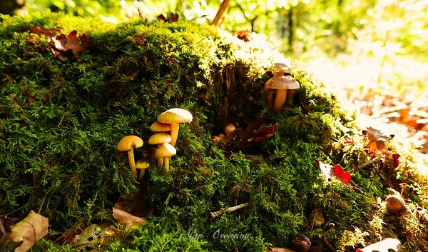 La célèbre famille champignon